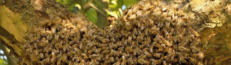 Helfen wir den Bienen und uns selbst.