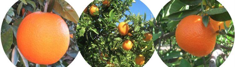 http://orangenfrisch-nachhause.naranjasdecullera.com/