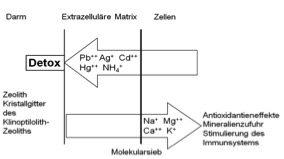 biocaregreen-grafik-001