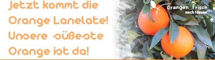 Die süßeste Orange der Plantage von Ruth Palomero ist ab jetzt verfügbar