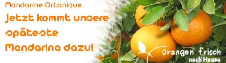 Die letzte Mandarine auf der Plantage von Ruth Palomero ist ab jetzt verfügbar
