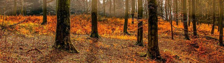 Eine Studie belegt: Der Wald hat einen positiven Einfluss auf unsere Gesundheit!