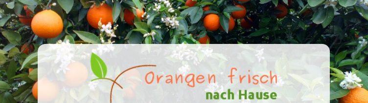 Informationen von Ruth Palomero's Obstplantage nahe Valencia (Spanien)