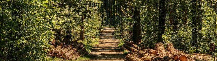 Geht es der Wirtschaft gut, dann wächst auch die Waldfläche.