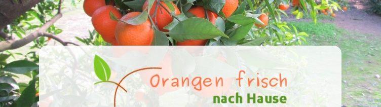 Informationen von Ruth's BIO-Obstplantage mit Direktversand bei Valencia in Spanien