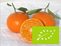 Orangenfrischnachhause-bio-mandarinen