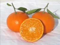 Orangenfrischnachhause-mandarinen