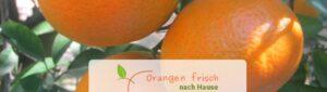 orangenfrischnachhause-clemenvilla