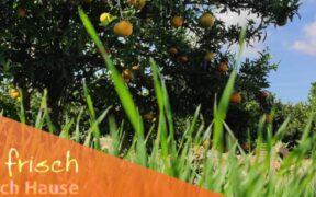 Orangenfrischnachhause Header Oktober 2021